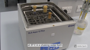 A still taken form the online lab used to model procedure, showing a water bath